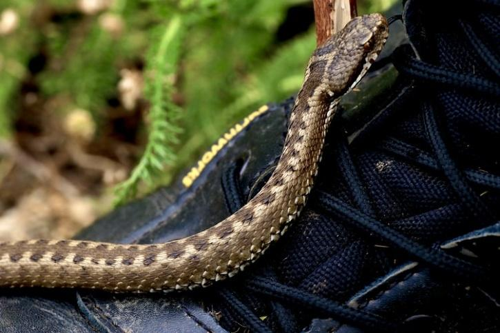 snake on the shoe
