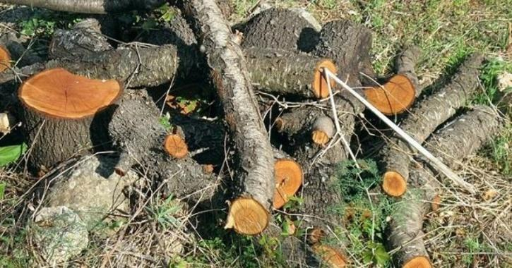 tree cutting aravalli