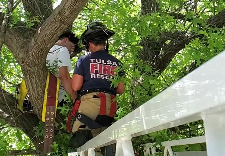 Firefighters save man stuck on tree while rescuing cat in US