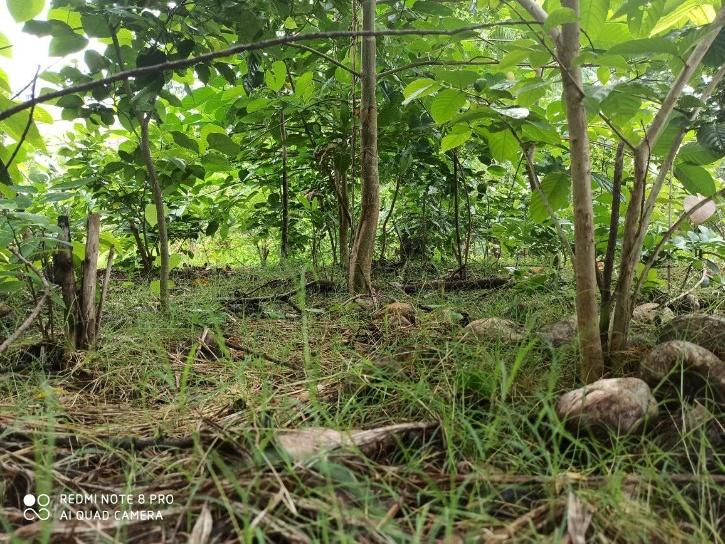 Mulund Micro Forest Mumbai Miyawaki Forest
