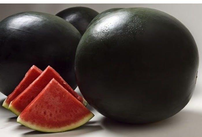 Densuke Watermelon price