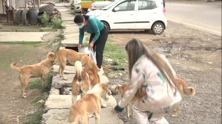Two Udhampur girls feeding stray dogs