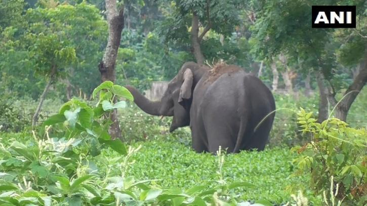 elephant in west bengal