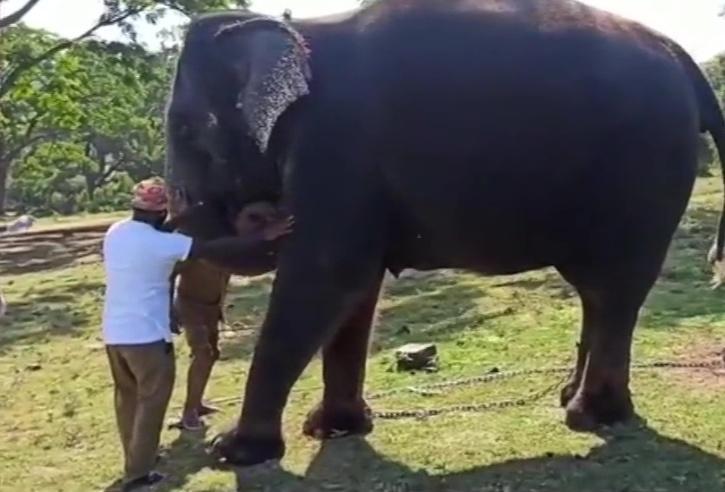 mudumalai elephant covid