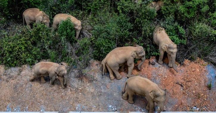 elephants-china-60ba05af43af8