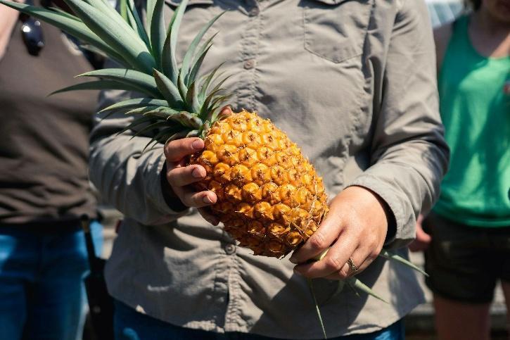 Heligan Pineapples price