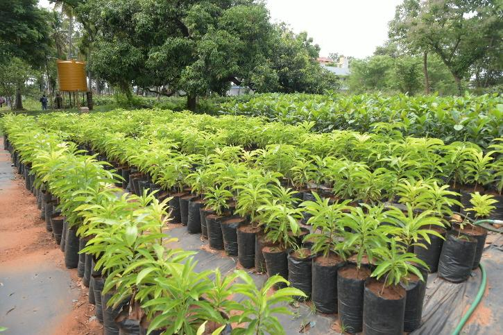 plant-2-60c5dfe28ad04
