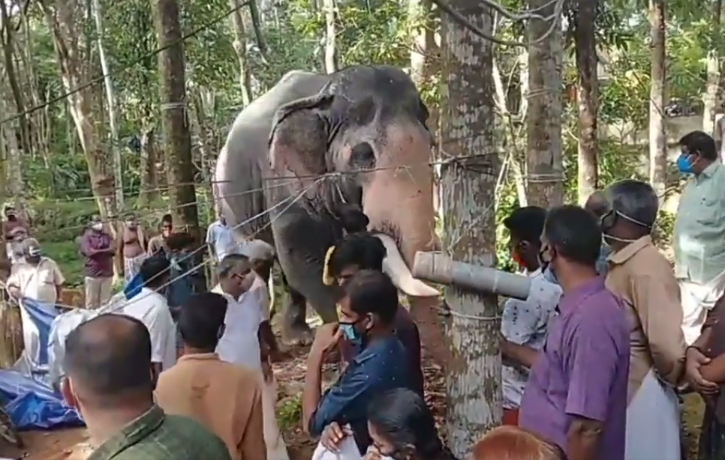 Elephants pays last respects to his mahout