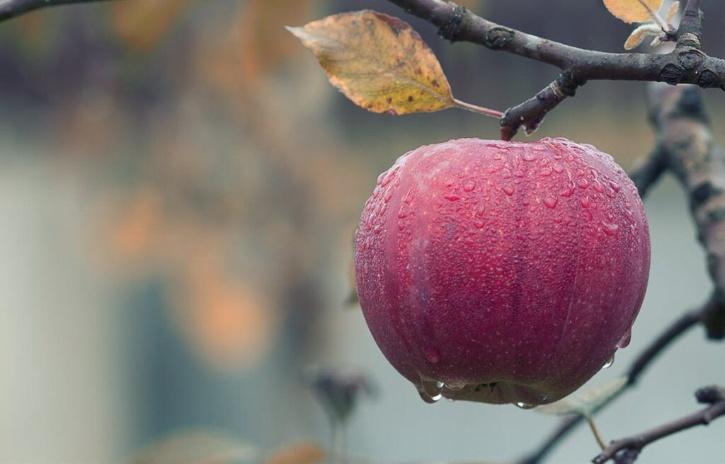 Sekai Ichi Apples price
