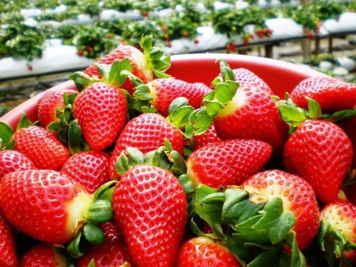 Sembikiya Queen Strawberries