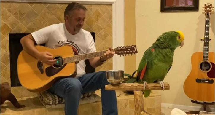 Tico the parrot