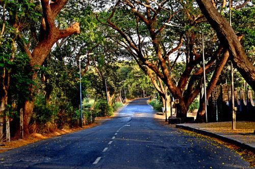 Aarey forest