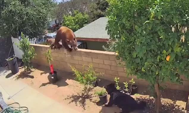 Girl pushes bear