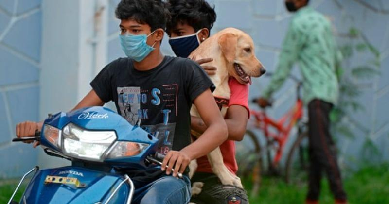 Goa Claims To Be First Rabies-Free State In The Country With Not Even  Single Case In 3 Years