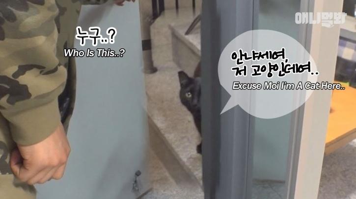 Stray Cat Enters Stranger