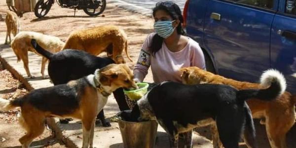 street-dogs-60b892a5472d7