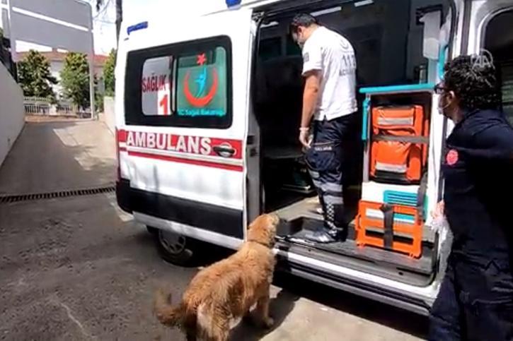 dog chases ambulance taking sick owner to hospital