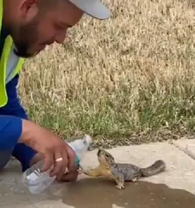 Man gives water to thirsty squirrel
