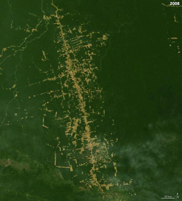 Amazon forest destruction