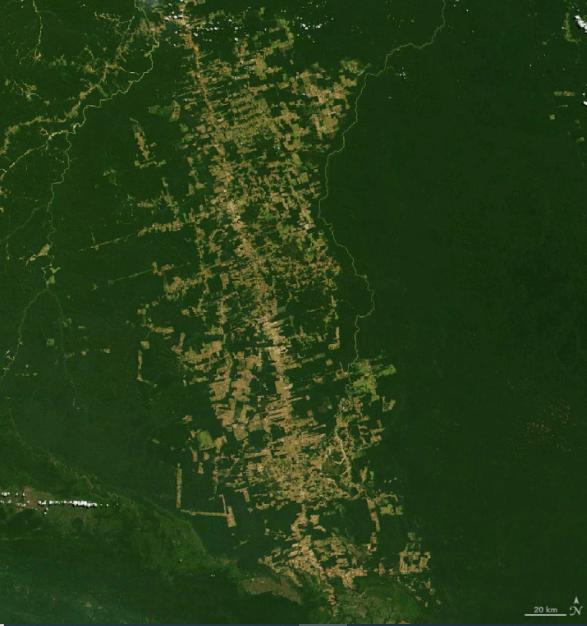 2020 forest destruction