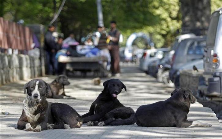 Gujarat man tortures stray dog
