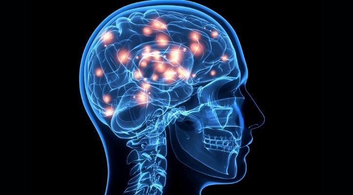 brain reward cocaine