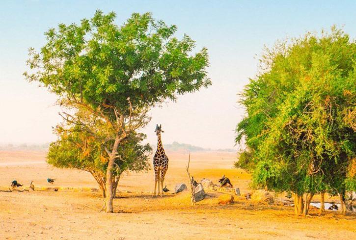 Abu Dhabi, wildlife park in Abu Dhabi, Places to visit in Abu Dhabi