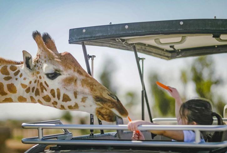 Parks in Abu Dhabi, Places to visit in ABu dhabi, Abu Dhabi holiday