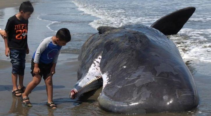marine mammals extinction