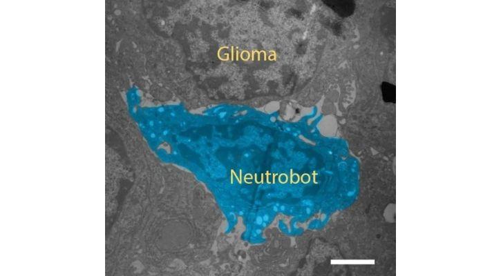 mice tumour robot