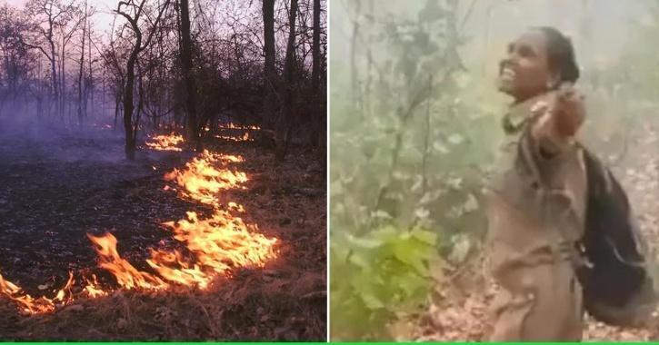 forest-fire-rain
