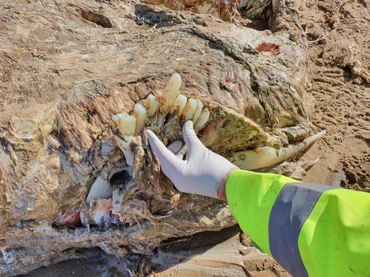 Marine Environmental Monitoring