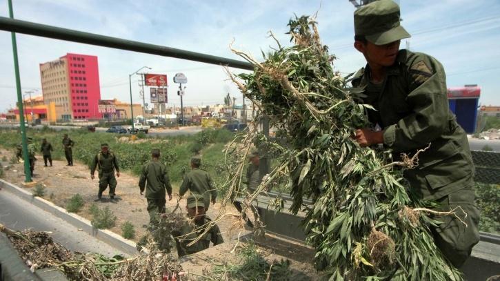 Mexico legal cannabis law