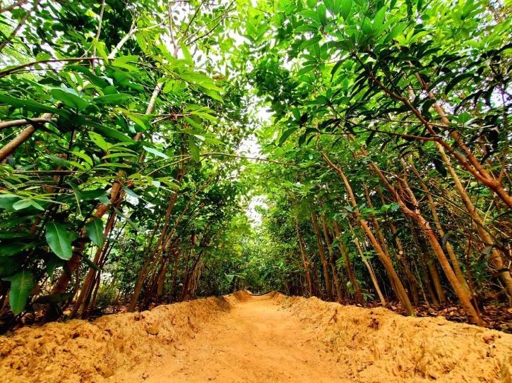 Chennai Garbage Yard Into a Lush Forest