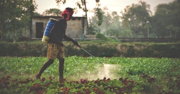 Farmer using pesticide in a remote village in Bihar