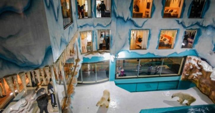 polar-bear-hotel