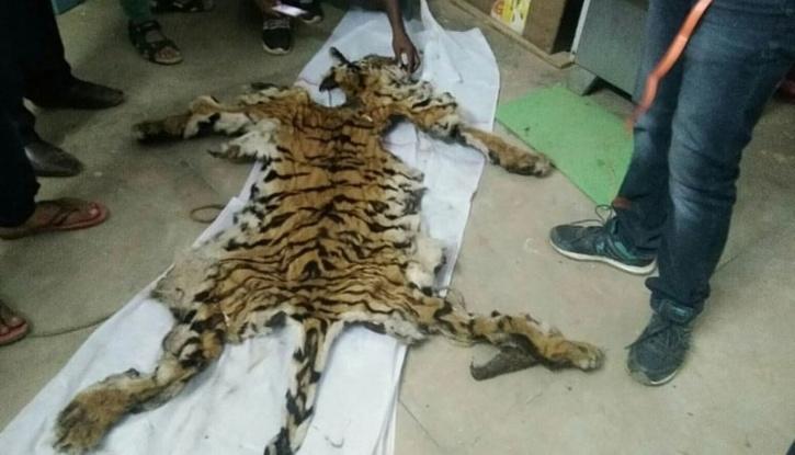 Tiger Skin Chhattisgarh