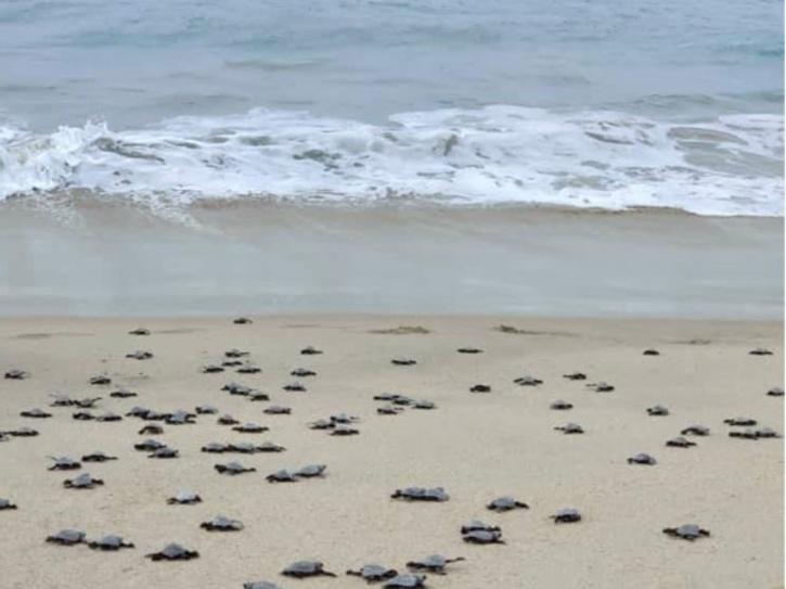 turtles-released