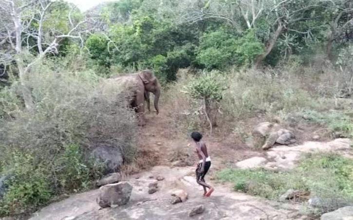 Youths harass elephants
