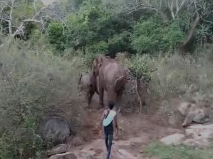 Tribal youths harass elephants