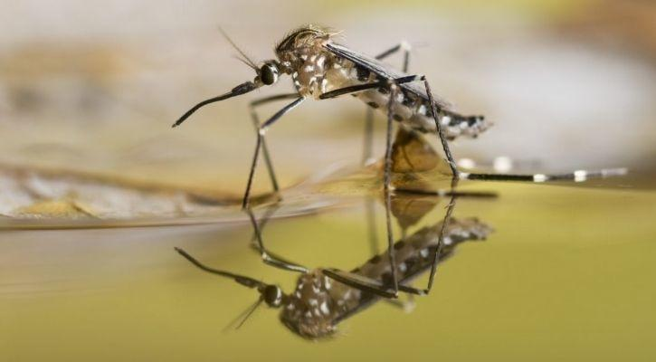 oxitech mosquito population