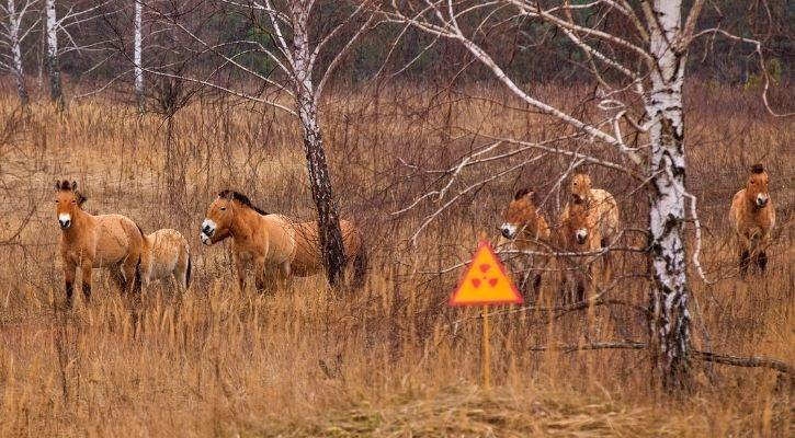 Chernobyl endangered animals