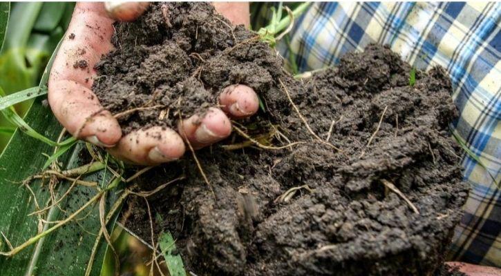 soil microbe carbon emission