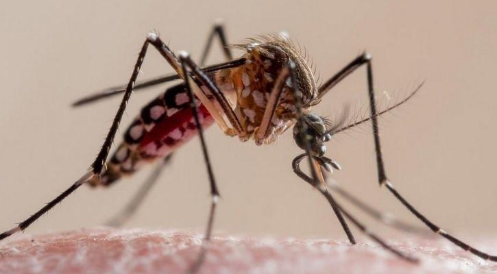 La población de mosquitos oxitech