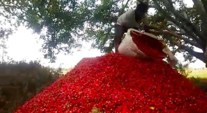 Karnataka Farmers Dump Flowers