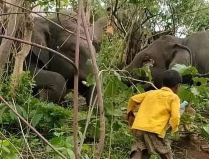 Assam Elephant Death