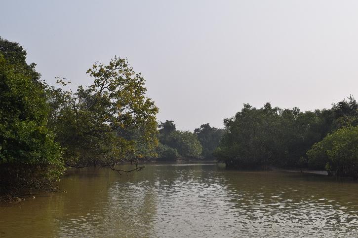 Odisha mangroves cyclone yaas