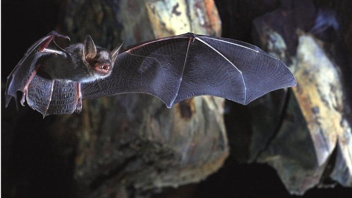 Bat found in Air India flight