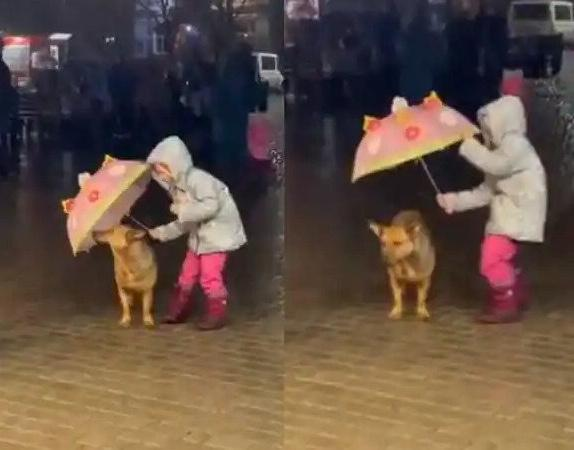 girl protects dog from rain