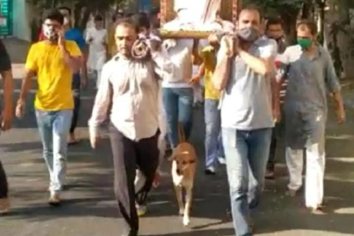 loyal dog walks in funeral procession